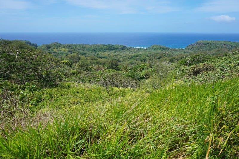 Isla austral Rurutu del paisaje verde de la vegetación foto de archivo