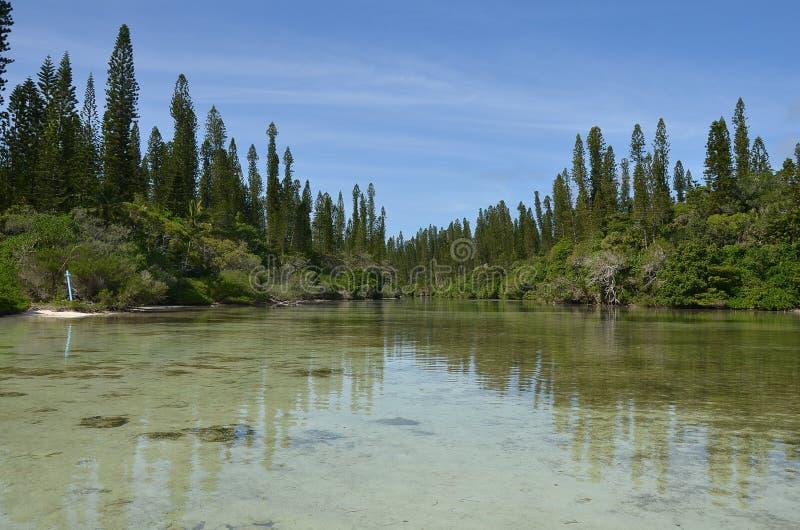 Isla Baie Oro Nueva Caledonia del pino imagen de archivo libre de regalías