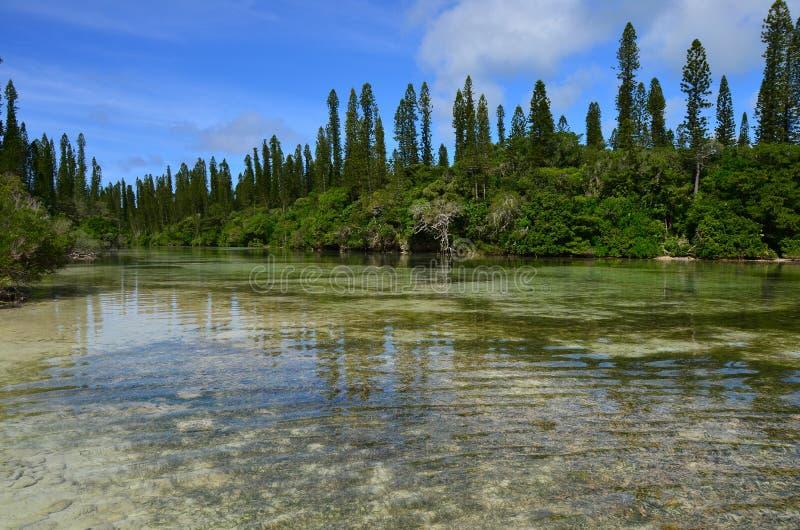 Isla Baie Oro Nueva Caledonia del pino fotografía de archivo libre de regalías