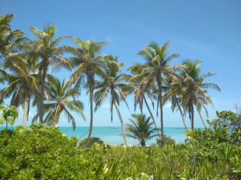 Isla Contoy - Mexicainne Paradise photographie stock libre de droits