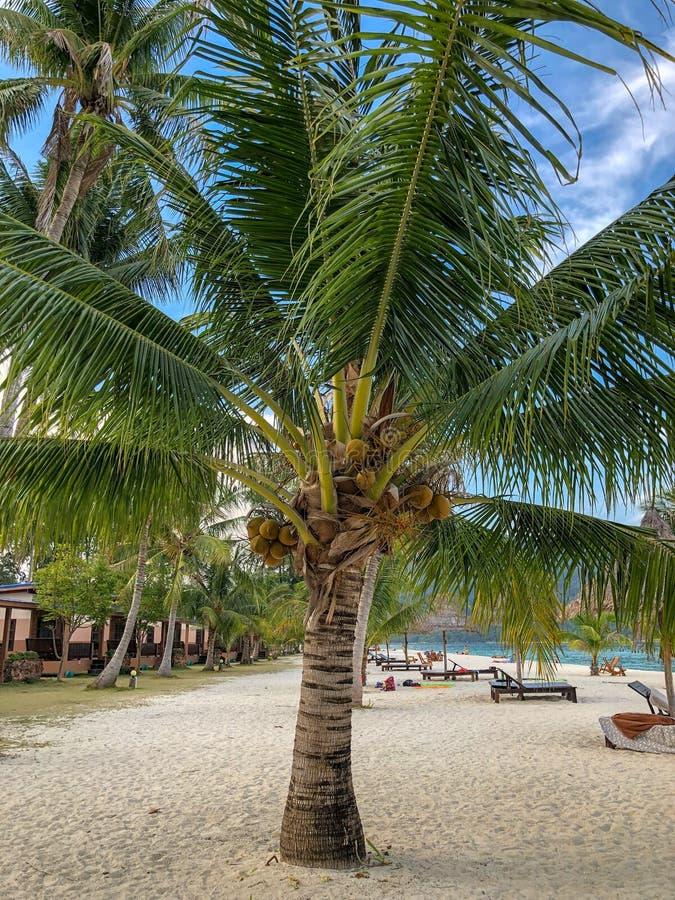 Isla Crystal Clear Sea, azul, palmas de Paradise, en fyre fotografía de archivo libre de regalías