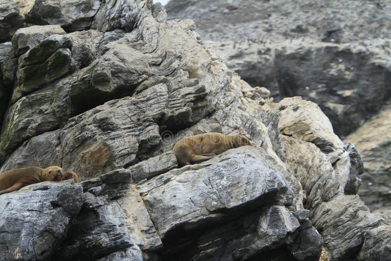 Isla Damas perto do La Serena Chile fotografia de stock