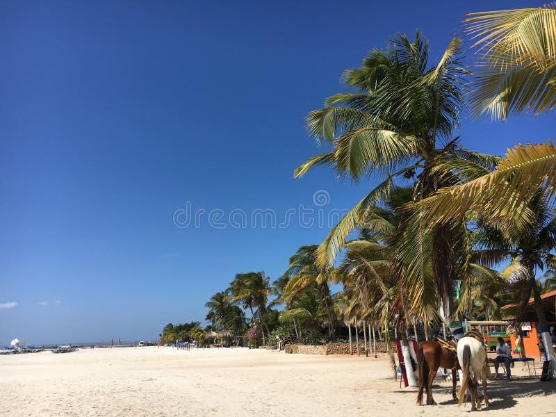 Isla de Coche de Venezuela, tiempo de verano en tropical foto de archivo libre de regalías