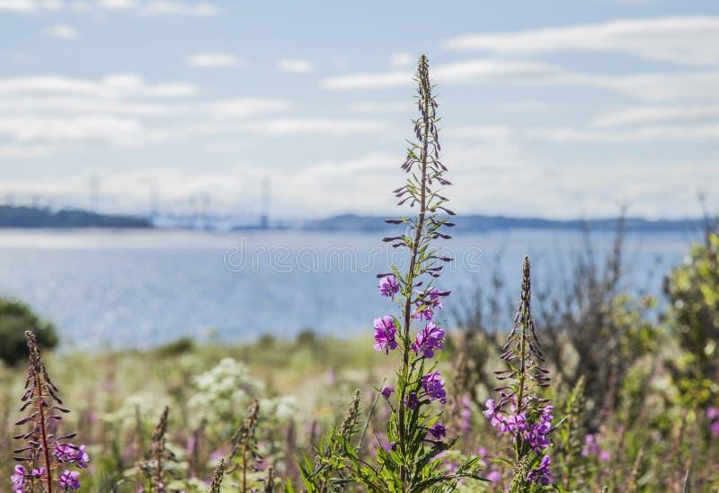 Isla de Cramond, Escocia - la visión foto de archivo libre de regalías