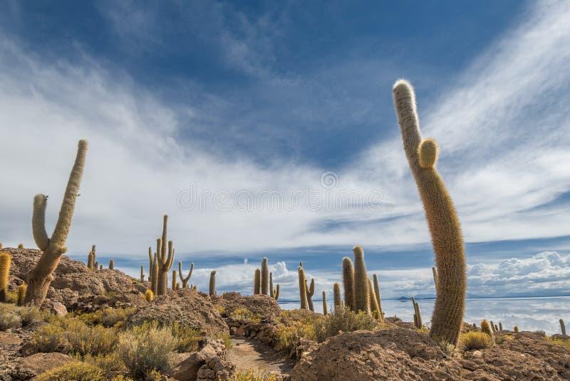 Isla de Incahuasi, Salar de Uyuni, Bolivia imagen de archivo libre de regalías