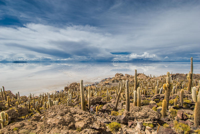 Isla de Incahuasi, Salar de Uyuni, Bolivia fotografía de archivo libre de regalías