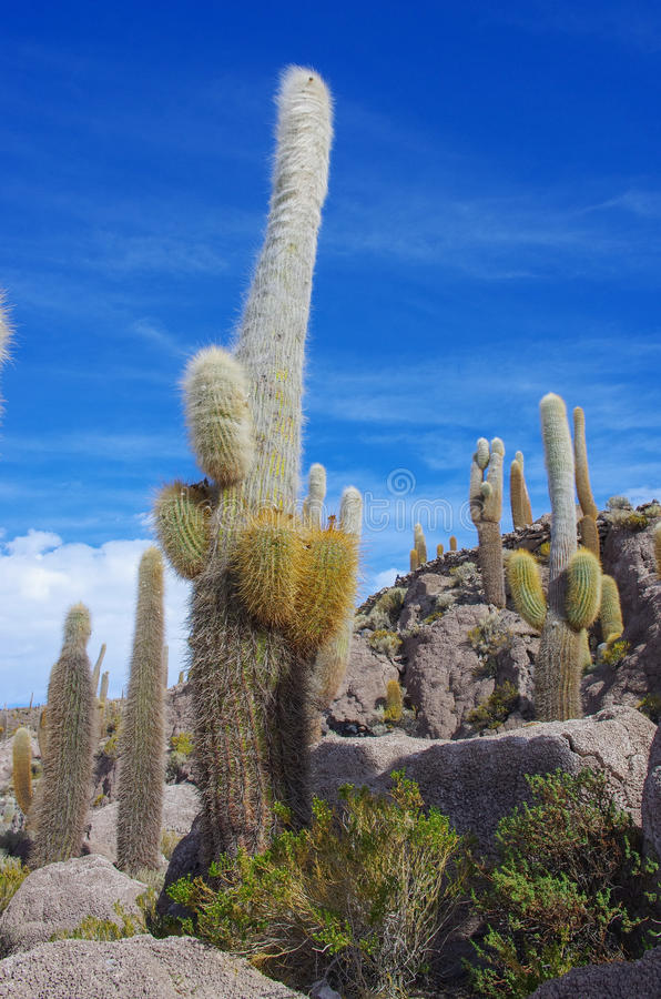 Isla de Incahuasi, Salar de Uyuni, Bolivia foto de archivo libre de regalías