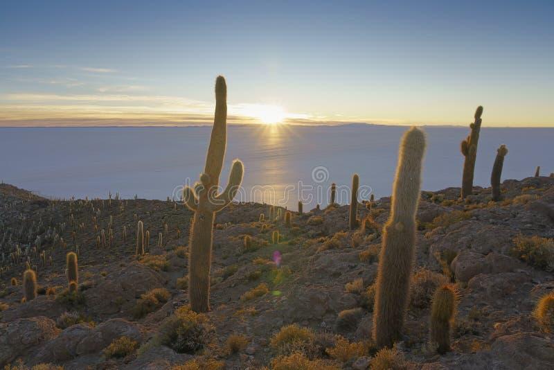 Isla de Incahuasi, Salar de Uyuni, Bolivia imágenes de archivo libres de regalías