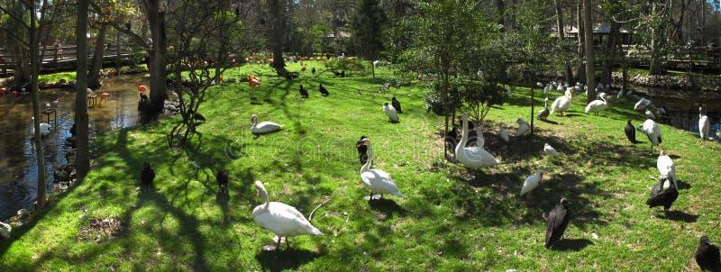 Isla de las aves acuáticas - resortes de Homosassa fotografía de archivo libre de regalías