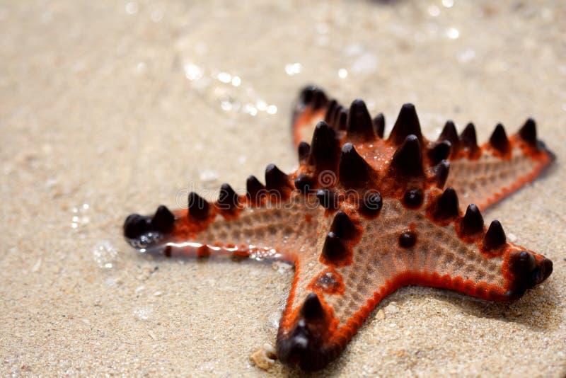 Isla de las estrellas de mar