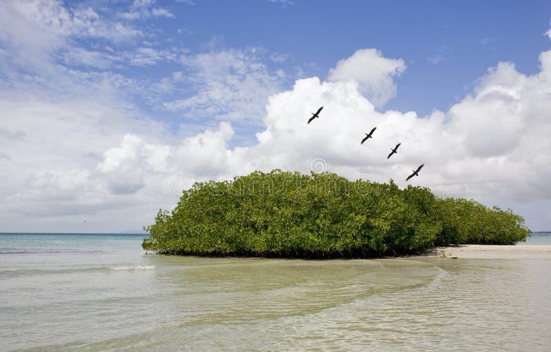 Isla de Margarita foto de archivo