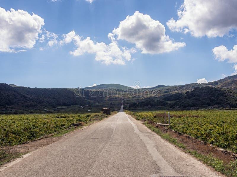 Isla de Pantelleria, Italia Paisaje de los vi?edos imágenes de archivo libres de regalías