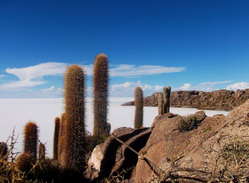 Isla de pescado kaktus salar de uyuni i Bolivia royaltyfri fotografi