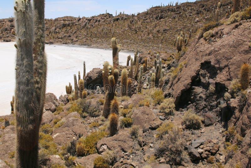 Isla de Pescadores, lago salt Uyuni en Bolivia Salar de Uyuni es el lago de sal más grande fotografía de archivo libre de regalías