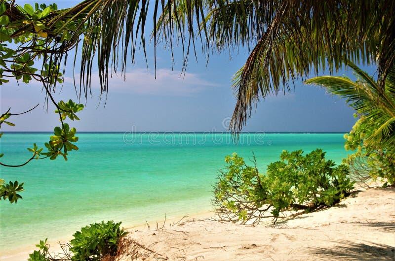 Isla 2 de Thoddoo de la playa de Maldivas imágenes de archivo libres de regalías