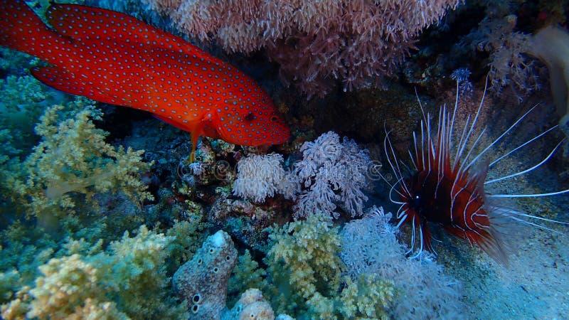 Isla de Tiran del Mar Rojo de Egipto imagen de archivo libre de regalías