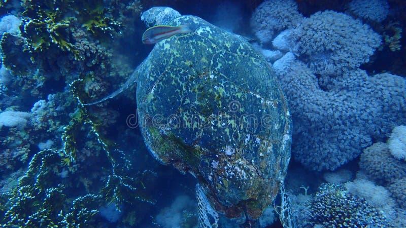 Isla de Tiran del Mar Rojo de Egipto foto de archivo