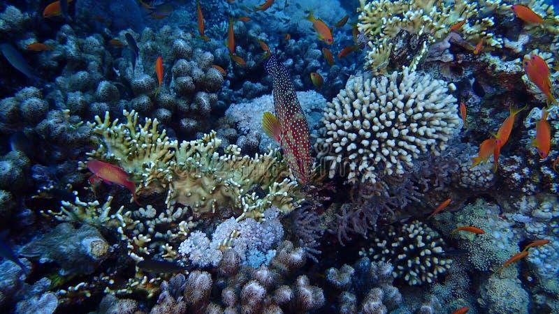 Isla de Tiran del Mar Rojo de Egipto fotografía de archivo