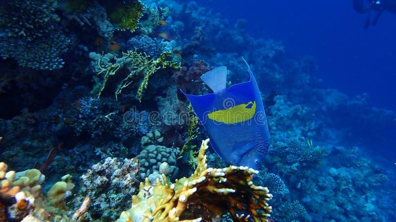 Isla de Tiran del Mar Rojo de Egipto fotos de archivo libres de regalías