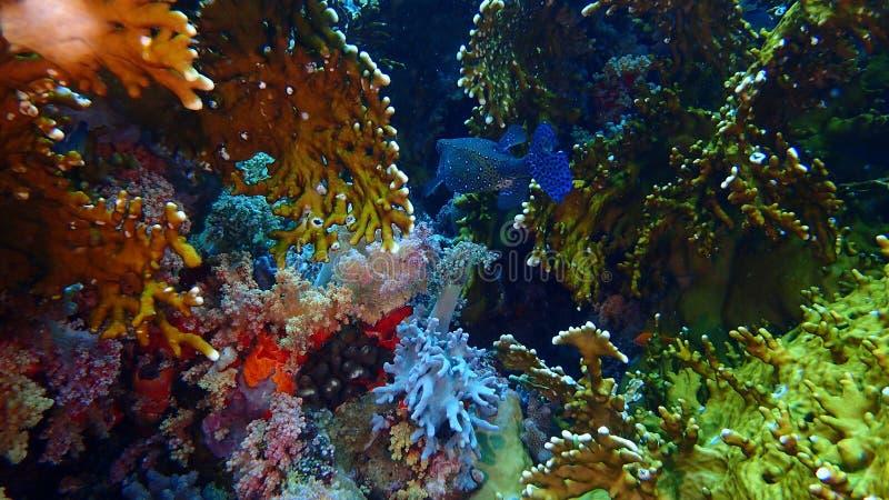 Isla de Tiran del Mar Rojo de Egipto foto de archivo libre de regalías