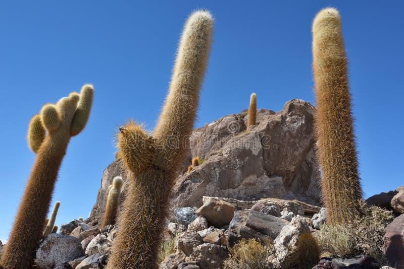 Isla del cactus en la sal de Uyuni plana fotos de archivo libres de regalías