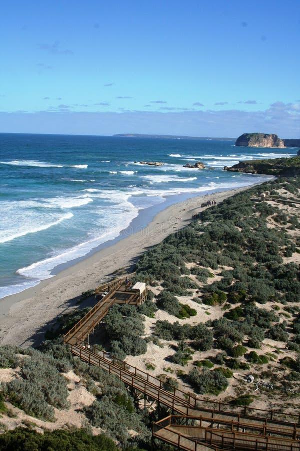 Isla del canguro fotos de archivo libres de regalías