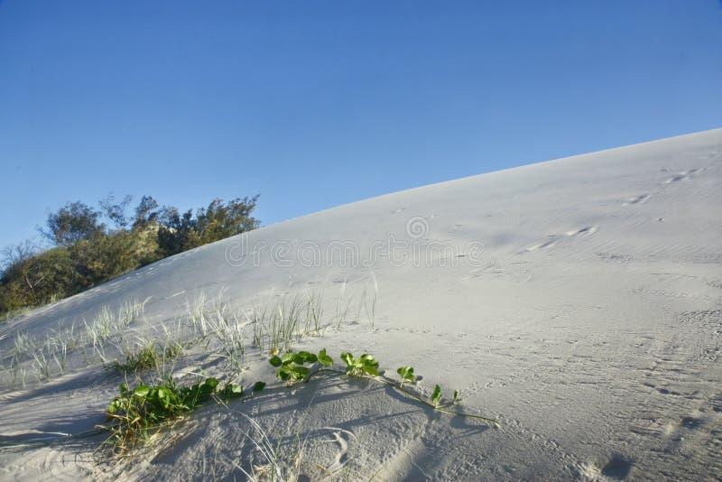 Isla del fraser de las dunas de arena imagenes de archivo