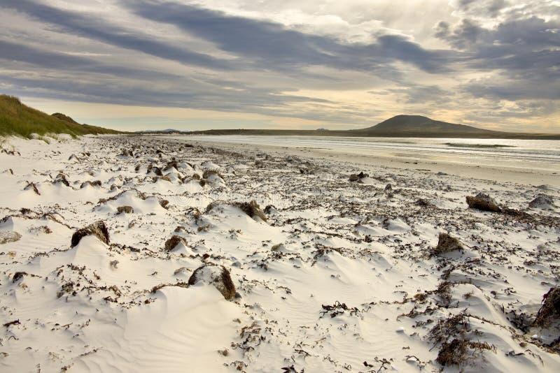 Isla del guijarro en Islas Malvinas fotografía de archivo
