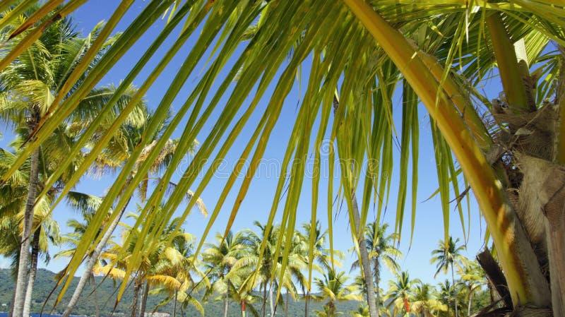 Isla del levantado de Cayo imagen de archivo
