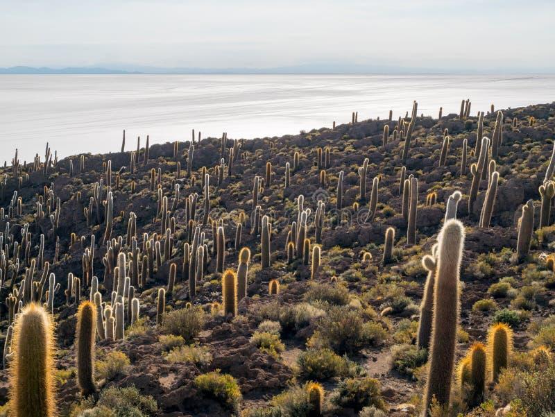 Isla del Pescado royaltyfri fotografi
