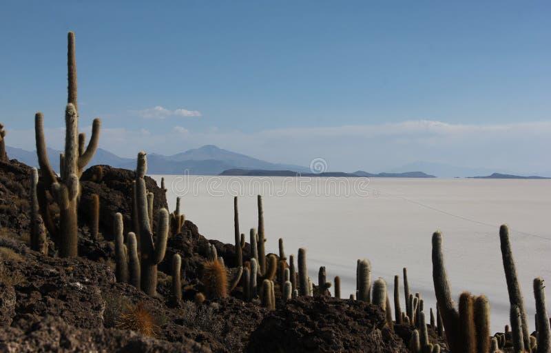Isla del Pescado em Bolívia fotografia de stock royalty free