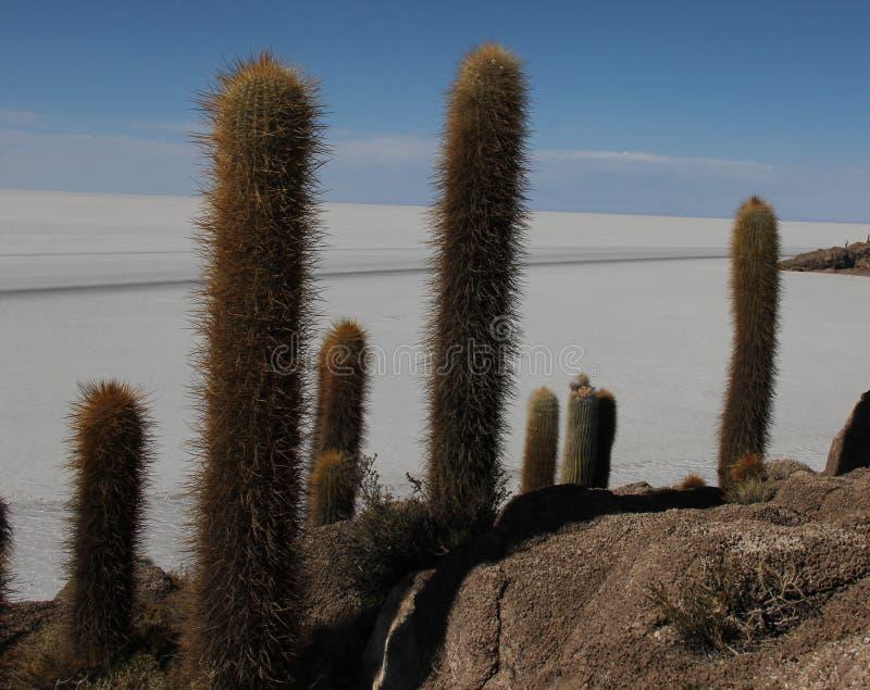 Isla del Pescado em Bolívia imagens de stock