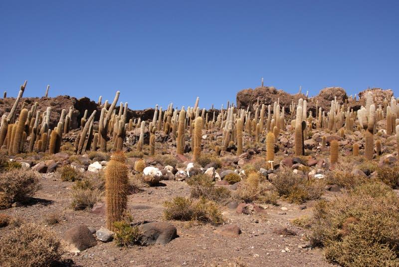 Isla del Pescado, Salar de Uyuni, Bolivia foto de archivo