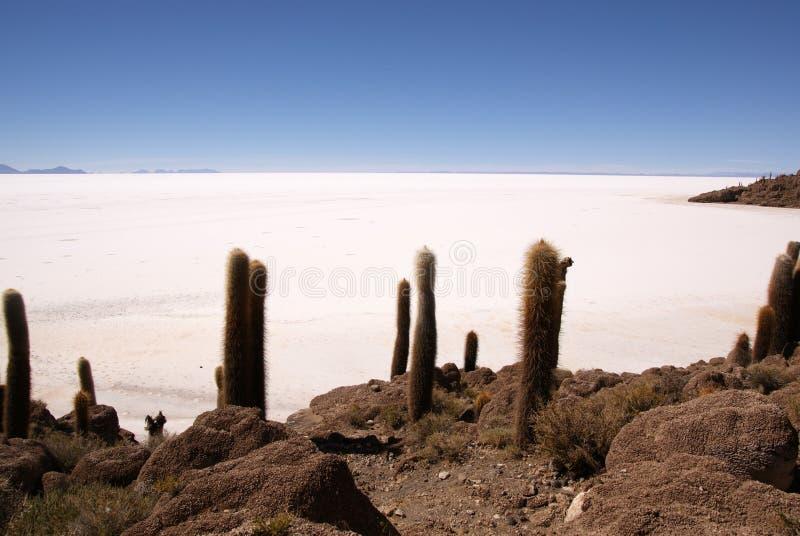 Isla del Pescado, Salar de Uyuni, Bolivia imagenes de archivo