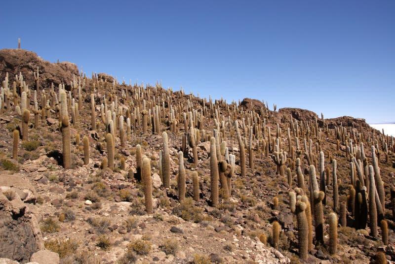 Isla del Pescado, Salar de Uyuni, Bolivia fotografia stock