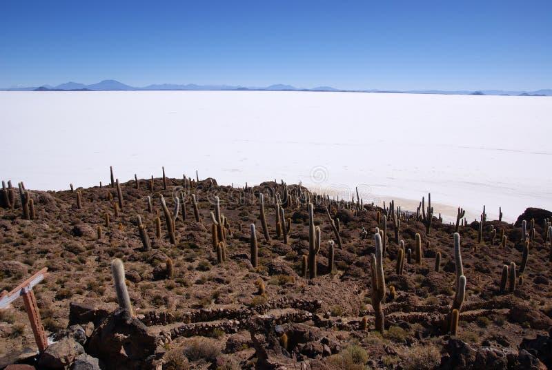 Isla del Pescado, Salar de Uyuni, Bolivia foto de archivo libre de regalías