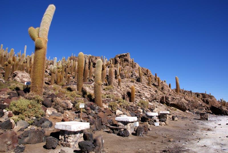 Isla del Pescado, Salar de Uyuni, Bolivia fotografie stock