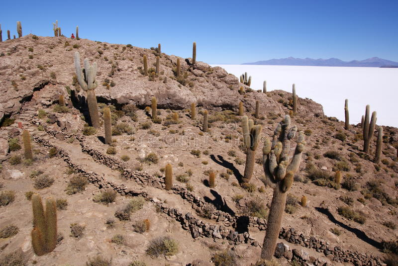 Isla Del Pescado, Salar De Uyuni, Boliwia fotografia stock