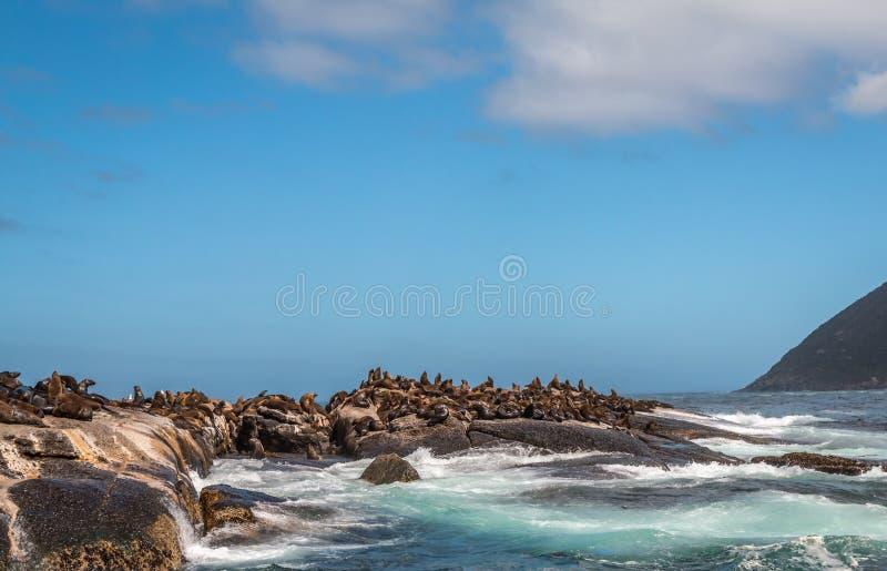 Isla del sello en Cape Town fotografía de archivo