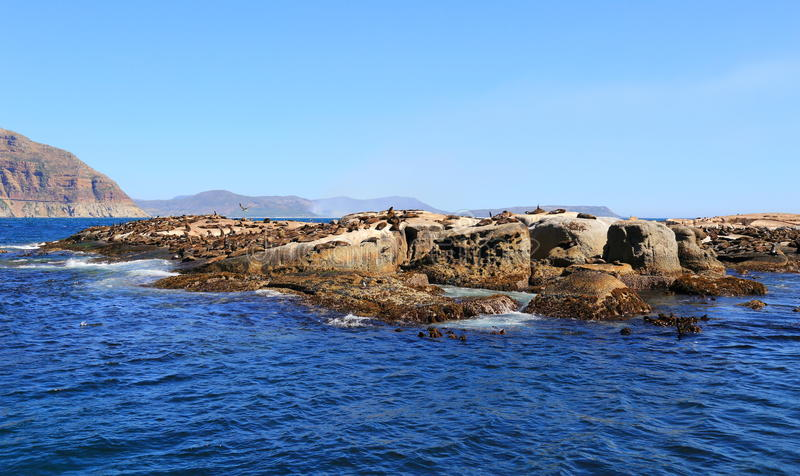 Isla del sello en Cape Town foto de archivo