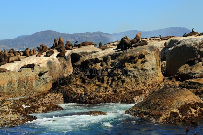 Isla del sello en Cape Town fotos de archivo libres de regalías