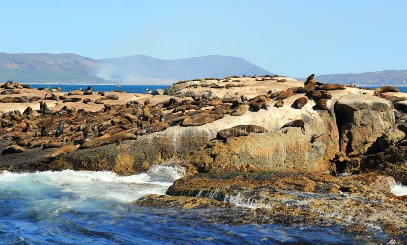 Isla del sello en Cape Town foto de archivo libre de regalías