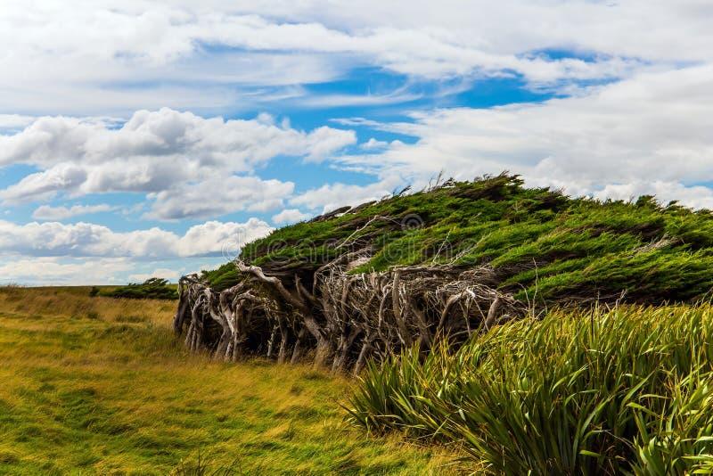 Isla del sur escénica en un día ventoso foto de archivo