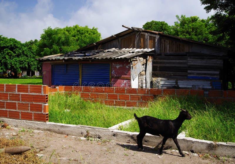 Isla Grande - hus under konstruktion Oavslutat hus för röd tegelsten royaltyfri fotografi