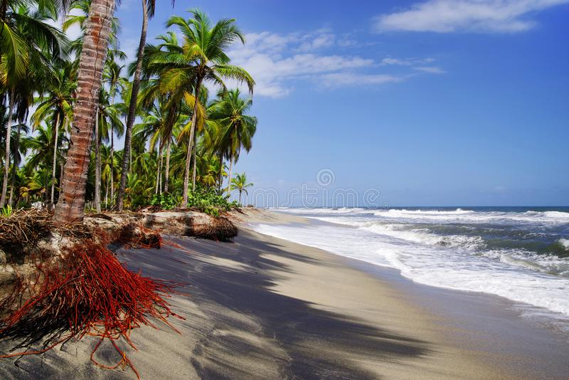 The Carribean Sea and one of its beautiful beaches on Isla Grande, Rosario Archipelago. Isla Grande is the largest island in the Rosario archipelago. The Coral royalty free stock photos