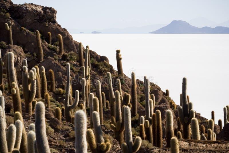 Isla Incahuasi, Bolívia fotos de stock royalty free