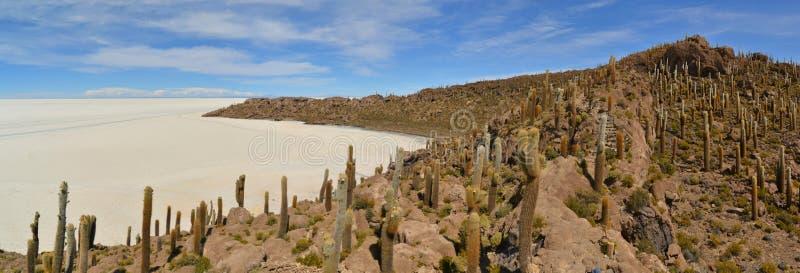 Isla Incahuasi del cactus en planos de la sal de Uyuni foto de archivo libre de regalías