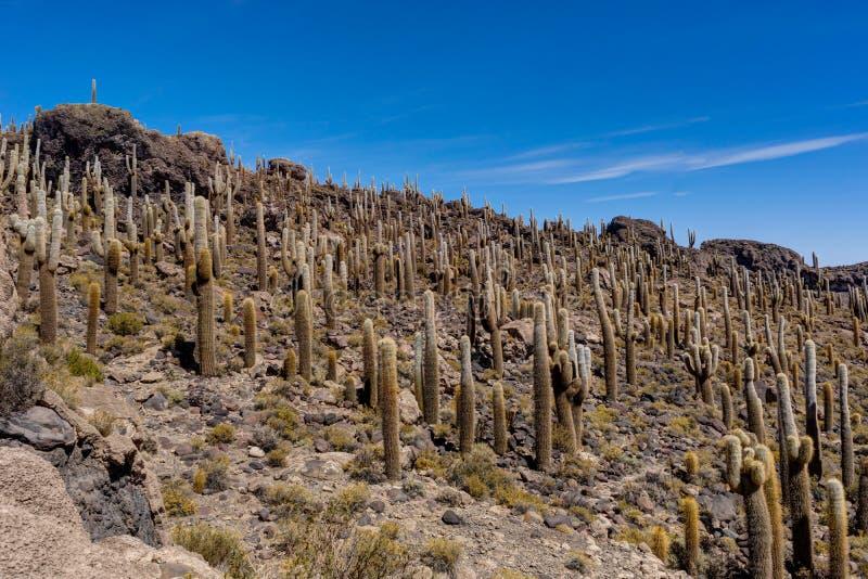 Isla Incahuasi en la isla del cactus de Salar de Uyuni imagen de archivo