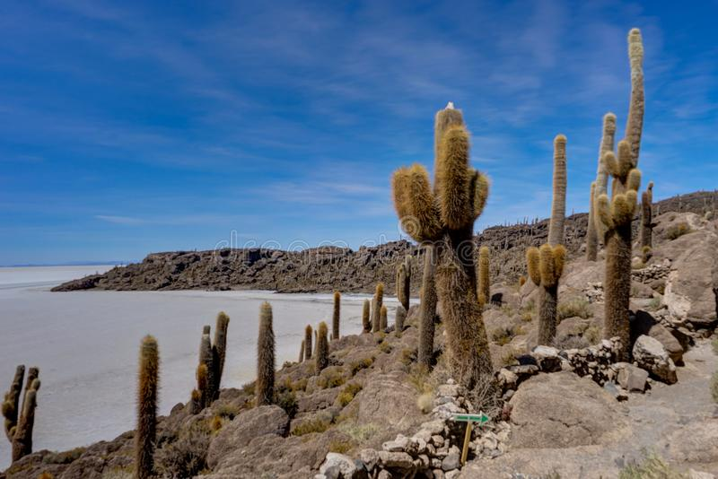 Isla Incahuasi nell'isola del cactus di Salar de Uyuni fotografia stock libera da diritti