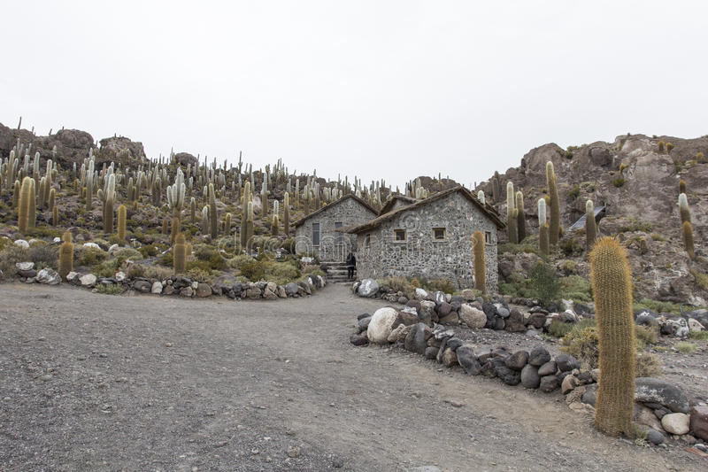 Isla Incahuasi & x28; Pescadores& x29; , Salar de Uyuni, Bolívia imagem de stock royalty free